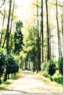 Trees | Baturraden